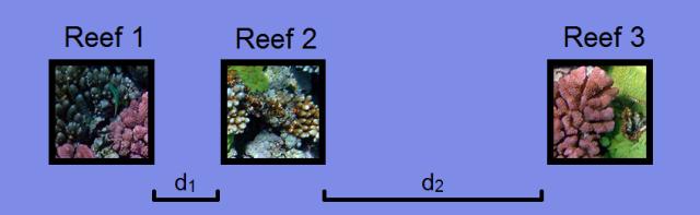 Reef metacommunity