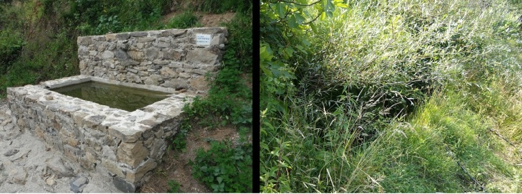 Figure 2. The transition between a maintained artificial water body (left) and an abandoned one unsuitable for yellow-bellied toads (right) can occur within a few years (photos: S. Canessa)