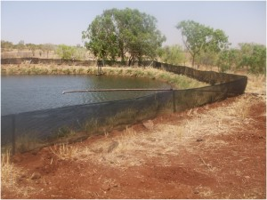 Figure 3: An earth dam used to store water pumped from underground by a mechanical bore. The dam has been temporarily fenced to prevent toads from accessing the water (Photo courtesy of Michael Letnic).