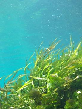 seaweed-1129226_1920